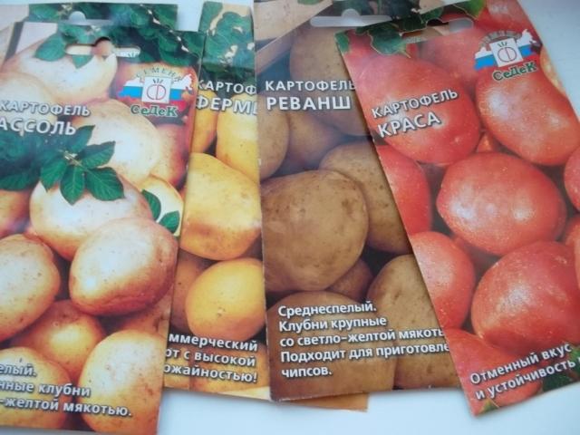 Картофель на рассаду сорта 111