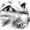Аватар пользователя Андрей Драбчук