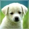 Аватар пользователя Nusia