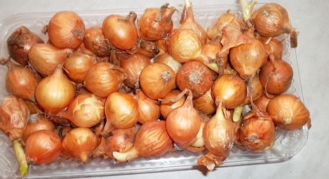 Когда сажать лук батуми 55