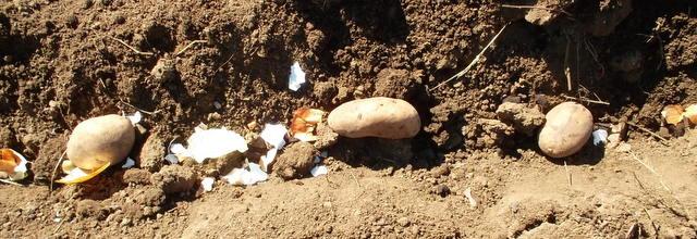 Когда сажать картофель на донбассе 21