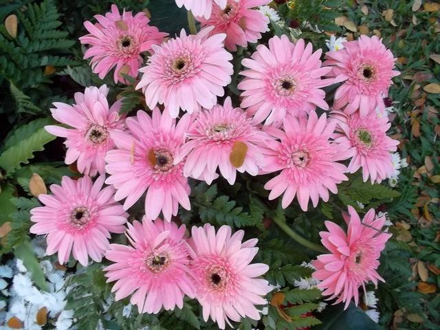 Виды цветов и их названий фото